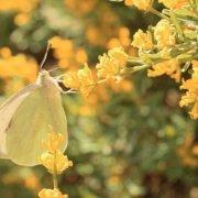 image d'un papillon sur une fleur dans un decor nature